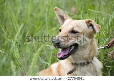 funny dog in the grass