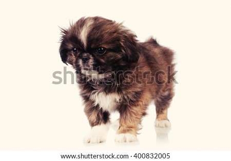 funny dog isolated over white background - stock photo