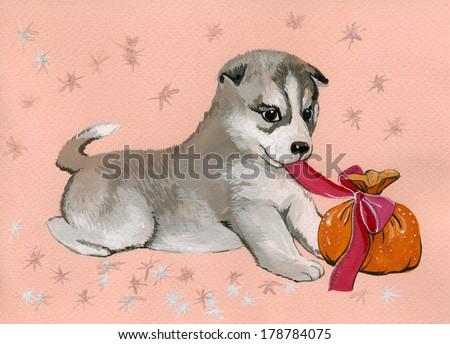funny dog, pet  - stock photo