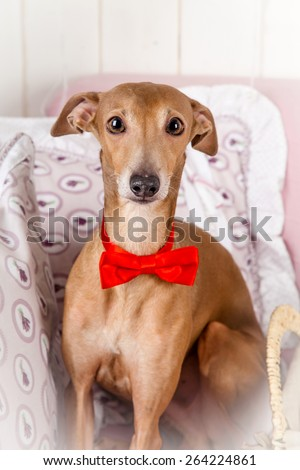 Funny dog portrait - stock photo