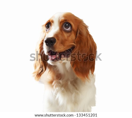 Funny dog portrait on a light background. Collage.