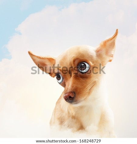 Funny dog portrait on a light background. Collage. - stock photo