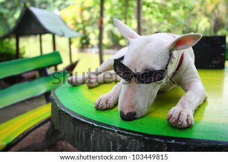 funny dog relaxing in park. - stock photo