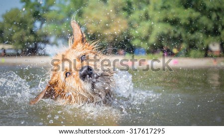 Funny dog shaking off water - stock photo