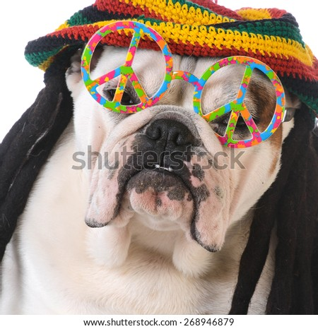 funny dog with dreadlock wig and peace glasses on white background - stock photo