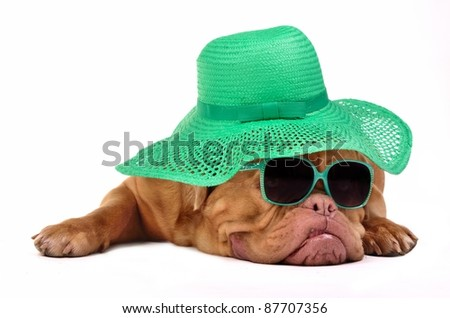 Funny dog with hat and glasses, isolated on white background - stock photo