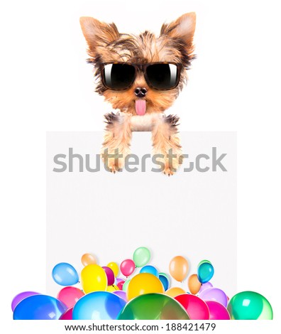 funny dog with Holiday banner and colorful balloons