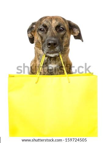 funny dog with shopping bag. isolated on white background - stock photo