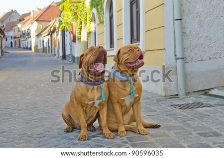 Funny dogs at small city street - stock photo