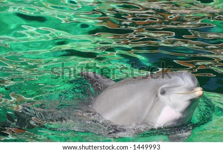 funny dolphin - stock photo