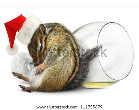 Funny drunk chipmunk dress santa hat with champagne glass on background - stock photo