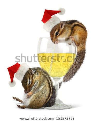 Funny drunk santas, chipmunks dress santa hat with champagne glass. - stock photo