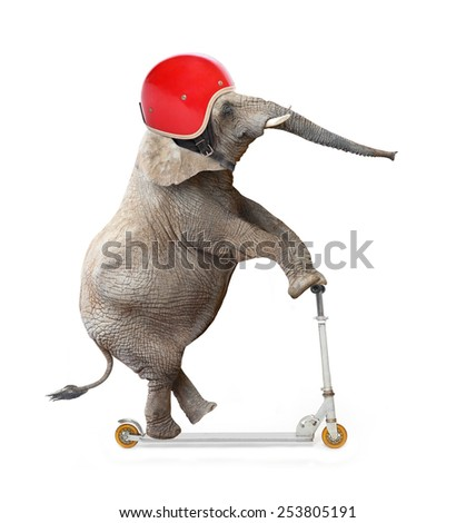 Funny elephant with protective helmet riding a push scooter. Safety and insurance concept. - stock photo