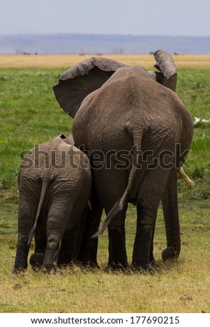Funny elephnats family, Africa - stock photo