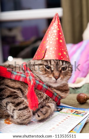 Funny european cat wearing christams hat and a scarf - stock photo