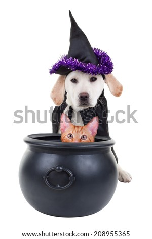 Funny evil Halloween witch puppy dog and pet cat - stock photo