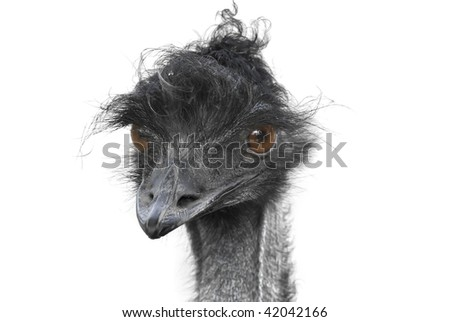 Funny expression of a staring ostrich.Shallow DOF - stock photo