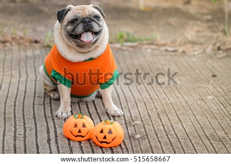 Funny face of pug dog with pumpkin halloween costume. & Funny Face Pug Dog Pumpkin Halloween Stock Photo (100% Legal ...