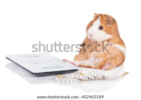 Pig On Scales Stock Images Royalty Free Images Amp Vectors