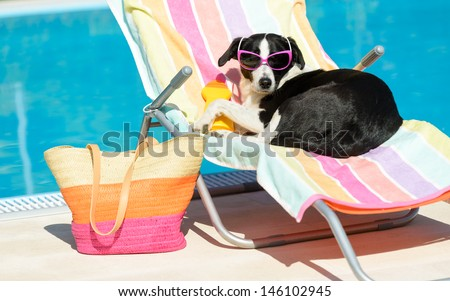 Funny female dog sunbathing on summer vacation wearing sunglasses. Pet relaxing on a hammock at swimming pool. - stock photo