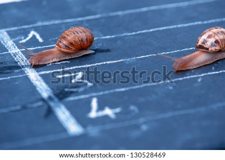 funny finish of racing snails - stock photo
