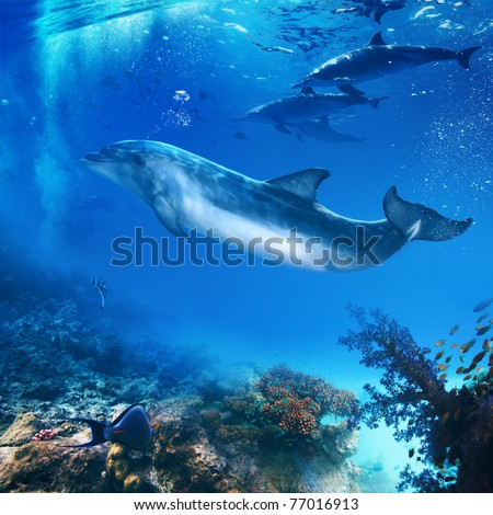 funny flipper posing underwater in front of dolphins family - stock photo