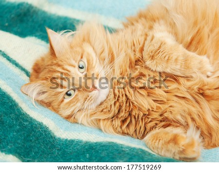 funny fluffy ginger cat lying on a bright blanket - stock photo