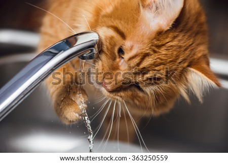 Funny Ginger Cat drinking water from kitchen tap - stock photo