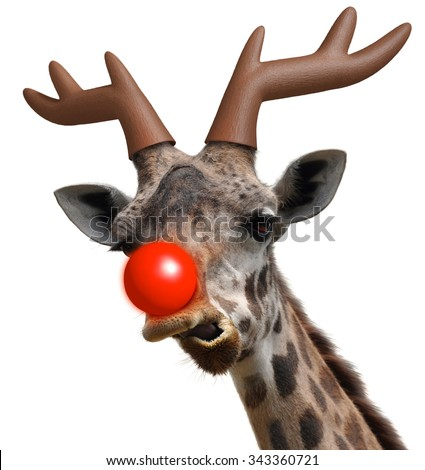 Funny giraffe face dressed as Santa Claus' red nosed reindeer for Christmas