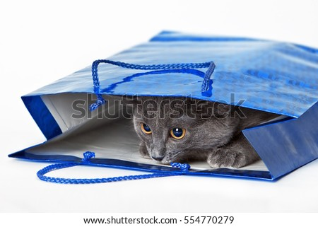 Funny gray cat hid in a gift bag