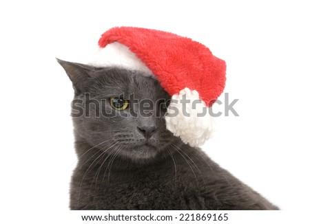 Funny Gray Cat Santa - Cute sad christmas cat - stock photo