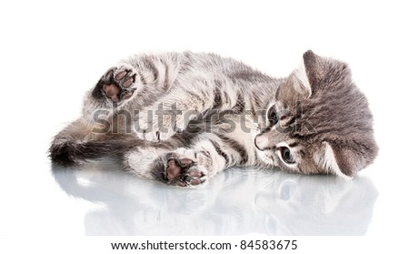Funny gray kitten isolated on white