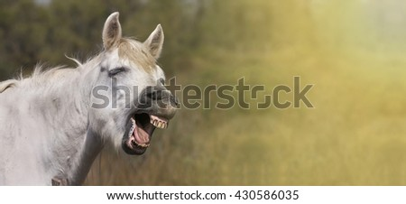 Funny grey horse laughing in the camera - stock photo
