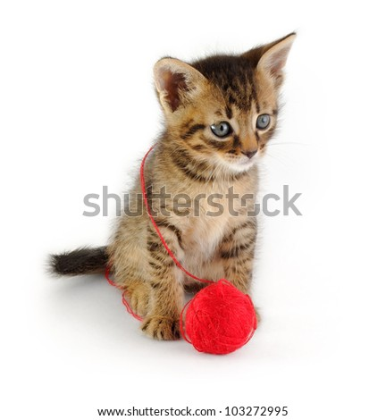 funny grey kitten sitting with red clew, isolated on white - stock photo