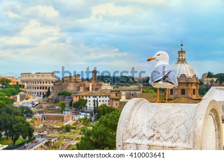 Funny gull sits on a parapet of the Altar of the Fatherland on the background ( blurred ) of the  Roman Colosseum, church of Santi Luca e Martina and the Roman Forum in sundown time.Rome.Italy.Europe. - stock photo