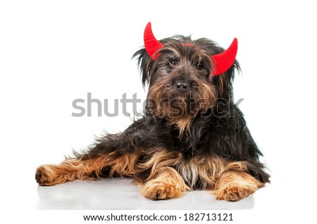 Funny hairy dog with horns isolated on white background - stock photo