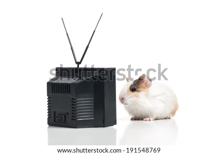 Funny hamster. Hamster watching TV. Isolated on white - stock photo