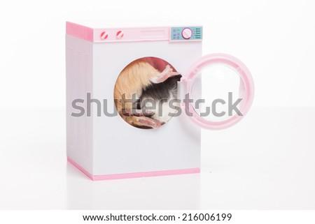 Funny hamsters sitting in washing machine. two masters inside washing machine - stock photo