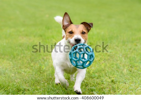 Funny happy terrier dog running and playing with ball - stock photo