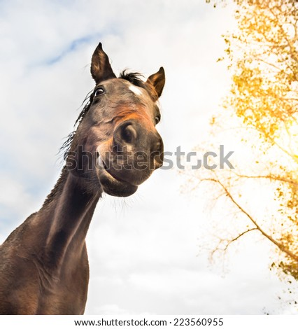 funny horse face against sky and tree , view from below  - stock photo
