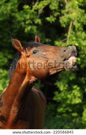 Funny horse smiling at the camera - stock photo