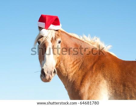 Horse Wearing a Santa Hat