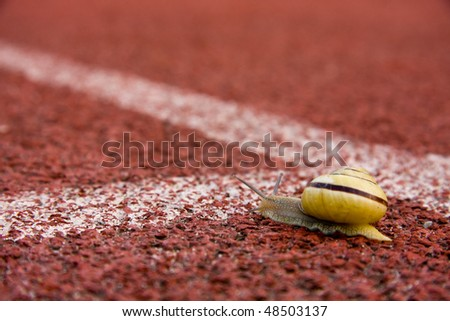 Funny image of snail running on course lane - stock photo