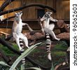 funny image of two ring-tailed lemurs - stock photo