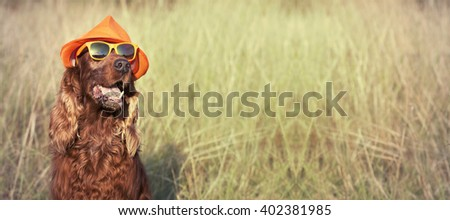 Funny Irish Setter dog - banner with copy space - stock photo