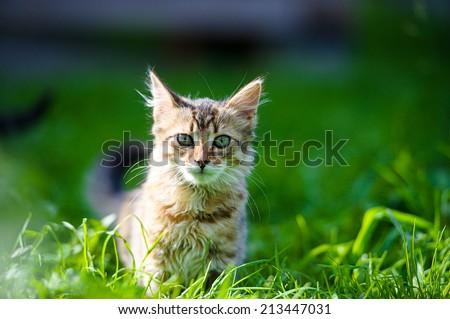 Funny kitten - stock photo