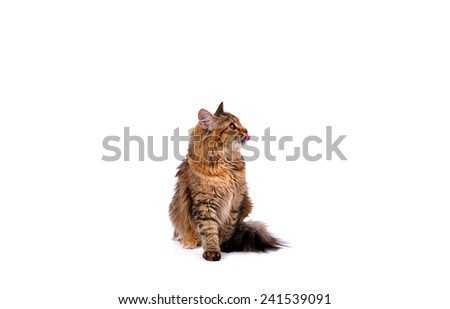 Funny kitten cat isolated on white