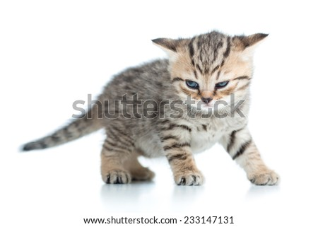 funny kitten cat isolated on white background - stock photo