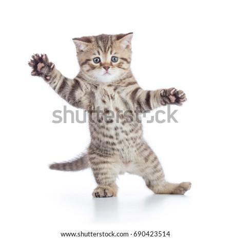 Funny Kitten Cat Standing Danc...