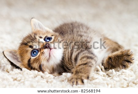 Funny kitten in carpet - stock photo